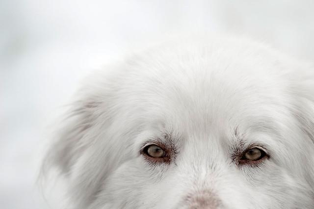 die Augen des Yeti