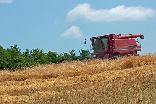 field farming grain harvest combine fields hay