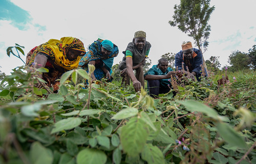 Forages in Tanzania: making trade-offs | by CIAT International Center for Tropical Agriculture