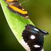 The Butterfly Sanctuary, Kuranda in Queensland, Australia