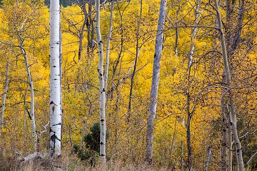 fall colorado unitedstates northamerica aspens rockymountains glenwoodsprings justinspics