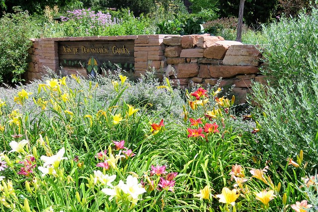 Daylilies in Profusion