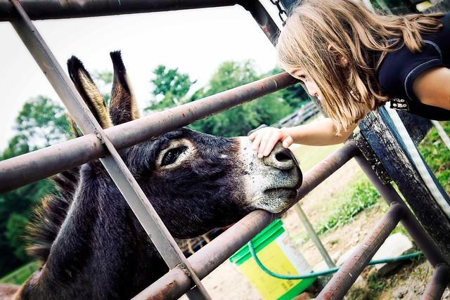 Good Donkey....