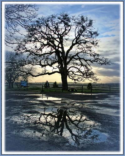 blue sunset reflection oaktree