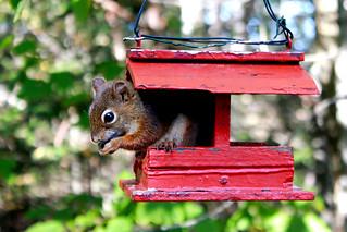 Squirrel | by R Joe Boyd
