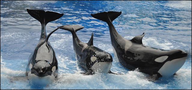 Shamu Family - One Ocean 2012