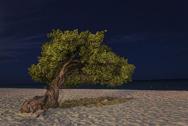 Light Painted Tree