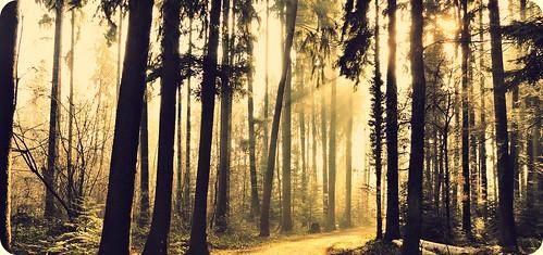 trees nature sunshine forest sunrise landscape switzerland