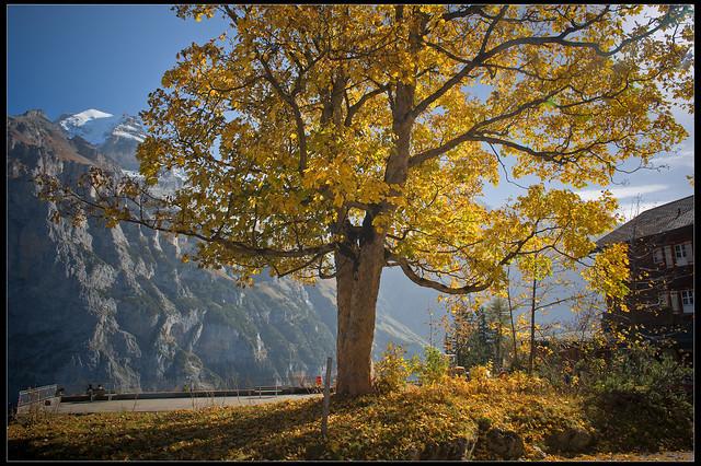 Swiss Autumn time in Murren. October 22 , 2012. No. 9905.