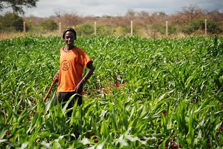 Young maize farmer, Ethiopia | by CIMMYT