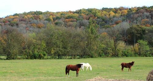 horses landscape autumcolors