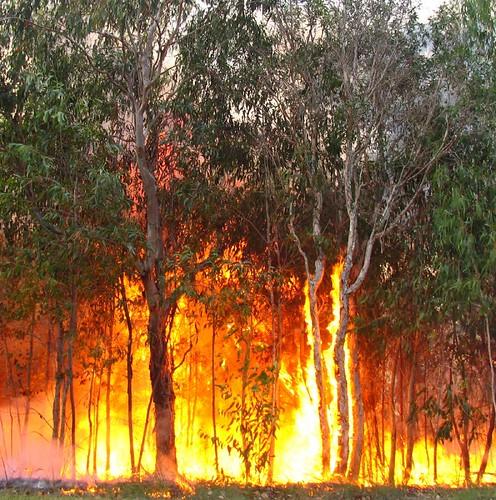 bushfire | by bertknot