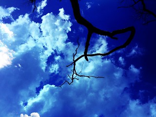 Branch with Sky | by Rantz