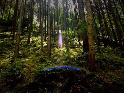 vignette caledoniafan lensflare nikon nikoncoolpixl820 thuringia thüringen thuringianforest thüringerwald germany deutschland sunlight sonnenlicht sonne sun sunshine sonnenschein green grün nature natur landscape landschaft nadelwald