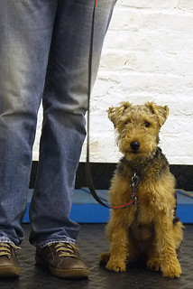 October 2012 Puppy Class   by Chadkirk Dog Training Club