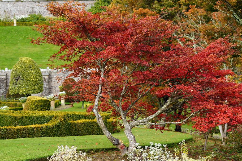 Drummond Gardens 2012