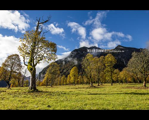 trees sky alps tree nature sunshine weather clouds forest landscape austria countryside tirol österreich herbst jahreszeiten natur himmel wolken location alpen orte landschaft wald bäume baum eng wetter sonnenschein ahornboden vomp