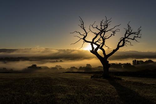 salkeld edenvalley langwathby cumbria sunrise trees shadows mist canon6d canonef1740mm manfrotto sky nature ©camraman ©daveliddle ©camaman ©davidliddle