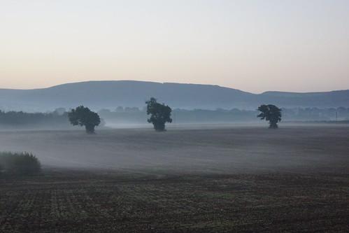 mist tree field sunrise cleveland hills rudby huntton