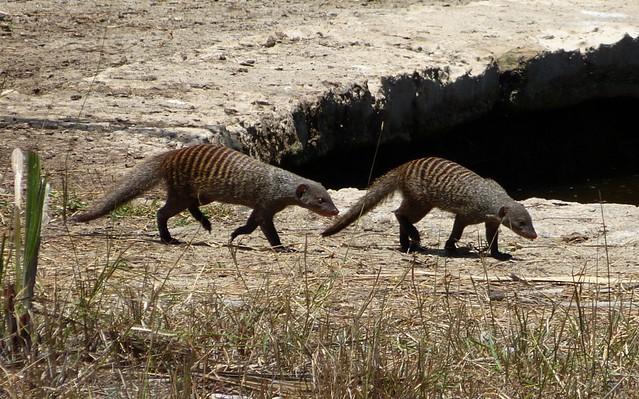 Saadani Safari Lodge Waterhole