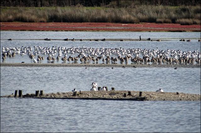 Brownsea Island lagoon