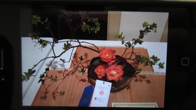 IMG_2144 marilyn radaz's winning ARS rose arrangement