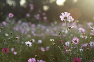 Field of Flowers | by GWP Photography