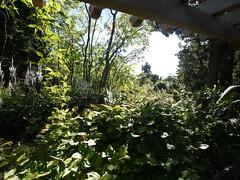 日, 2012-09-23 15:49 - ワイルドガーデン