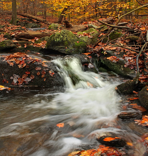 autumn trees leaves creek forest waterfall moss rocks stream pennsylvania falls foliage cascades creativecommons appalachiantrail leaflitter franklincounty redrun michauxstateforest beartownwoodsnaturalarea bicentennialtreetrail mentzergap