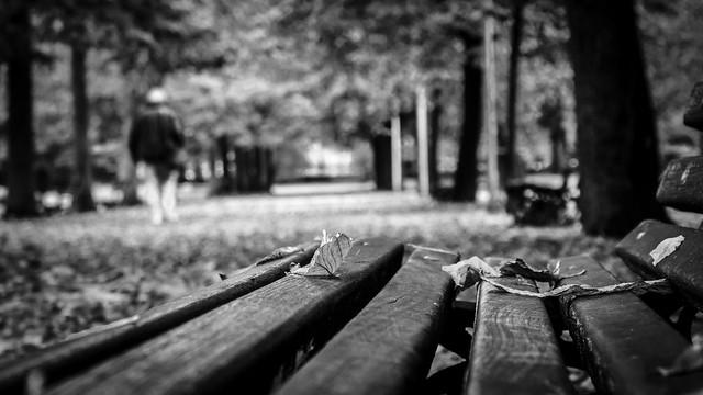 autunno a Modena