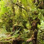 Nueva Zelanda, Isla Sur 37