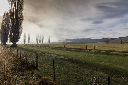 trees newzealand mist fog clouds sunrise foggy southisland otago poplartree tarras mistytarrasotagonewzealand