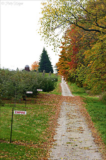 Autumn Harvest 2012 - © Patty Keigan