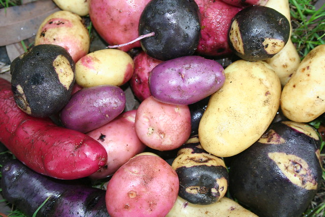 CHILE - Chiloé Agriculture