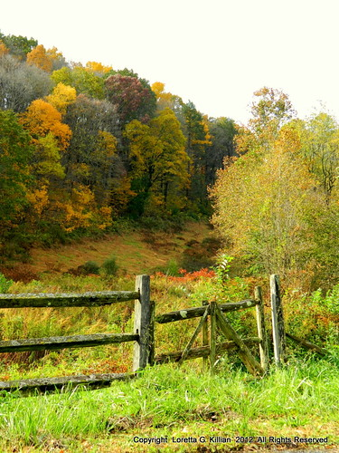old autumn trees fall abandoned nature field leaves automne arbol wooden gate colorful natural pennsylvania natureza herbst foliage pa pasture forgotten albero autunno arbre baum decayed lehighvalley dilapidated unused otono thegalaxy northamptoncounty slatebelt lowermtbetheltownship garrroad bewiahn