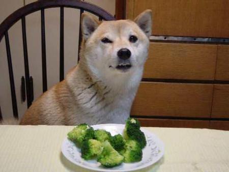犬とブロッコリー