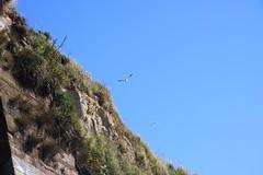 Whitey Paragliding