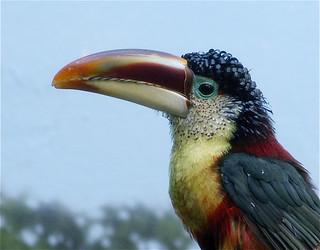8109052792 0fbfb44bd4 n - 16 животных, которыми природа хотела всех впечатлить, и ей это удалось