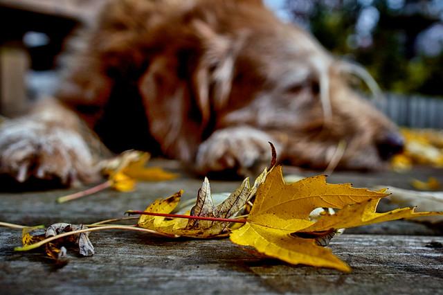 Lazy Days of . . . Autumn