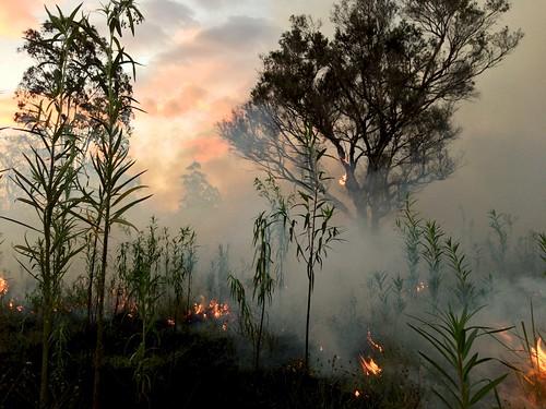 fire smoke bushfire rfs