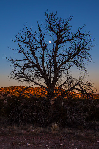 sunset moon newmexico santafe tree dead pinon galisteobasinpreserve