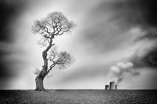 marias tree
