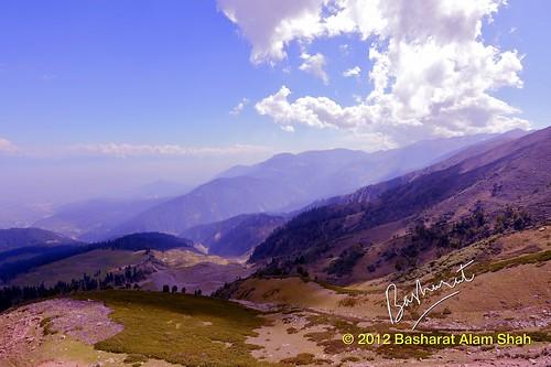 india lake dal kashmir srinagar chinar