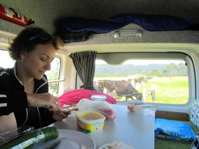 Lunch at Karamea's cow fields by the beach
