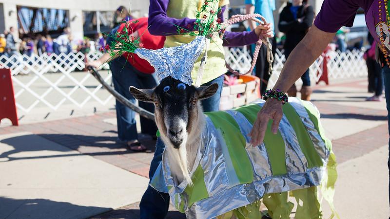 2013 Krewe of Barkus and Meoux Pet Parade in Shreveport, Louisiana