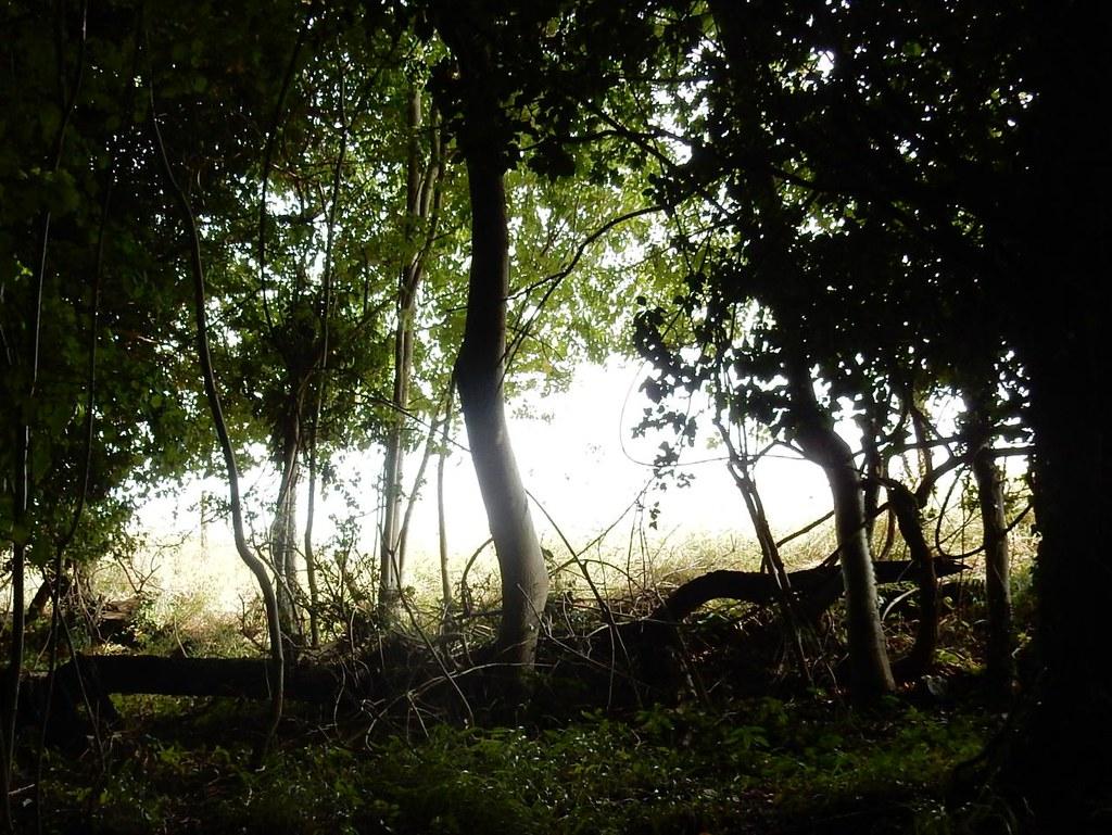 Woodland edge Henley Circular via Stonor