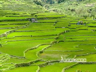 Hapao Rice Terraces | by Inkblots™