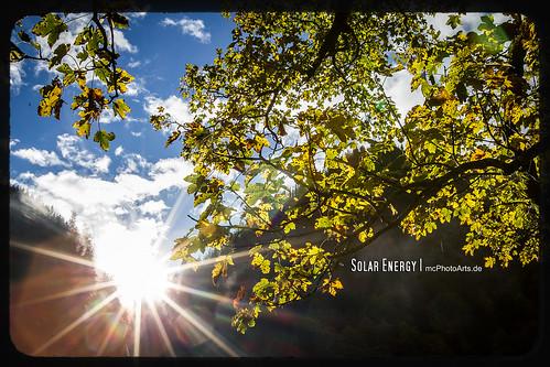 trees tree nature leaves austria leaf österreich laub herbst jahreszeiten natur location orte blatt sonne blätter bäume baum eng gegenlicht ahornboden laubblätter fotoeigenschaft