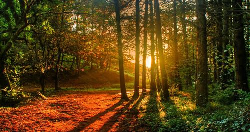 autumn trees sun leaves glen isleofman