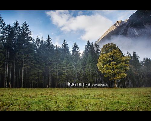 trees sky tree nature clouds austria tirol österreich herbst jahreszeiten natur himmel wolken location orte bäume baum hdr eng hdri lightroom photomatix ahornboden vomp photoshopcs4 fotoeigenschaft